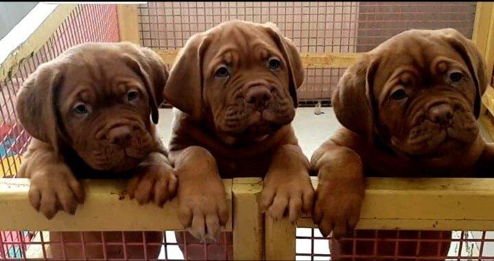 'Yavru köpek eğitimi nasıl verilir ?' sorusunun yanıtı için bizimle iletişime geçin !