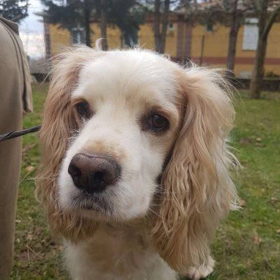 Köpek kreşi İstanbul Anadolu Yakası hizmeti için bizimle iletişime geçmeniz yeterli.