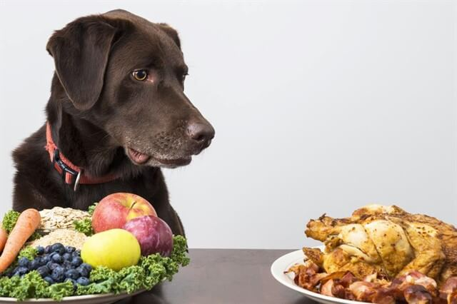 Köpeklerin beslenme sürecine yaş, fiziksel yapı, gebelik ve hastalık durumu gibi birçok faktör etki eder.
