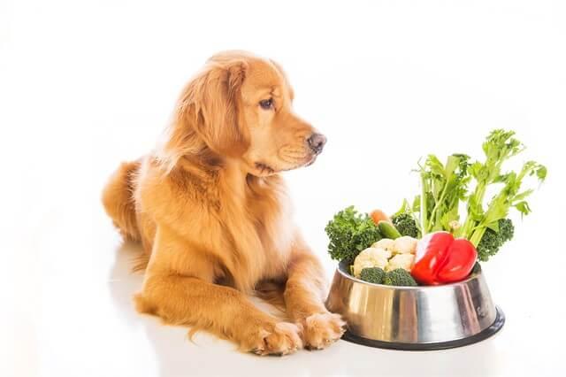 Köpeklerde sürekli mama değiştirmek doğru bir yaklaşım değildir.