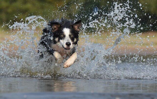 Sıcak havalarda köpeklerimizin su kaplarının takibini çok daha sıkı yapmamız gerekir.