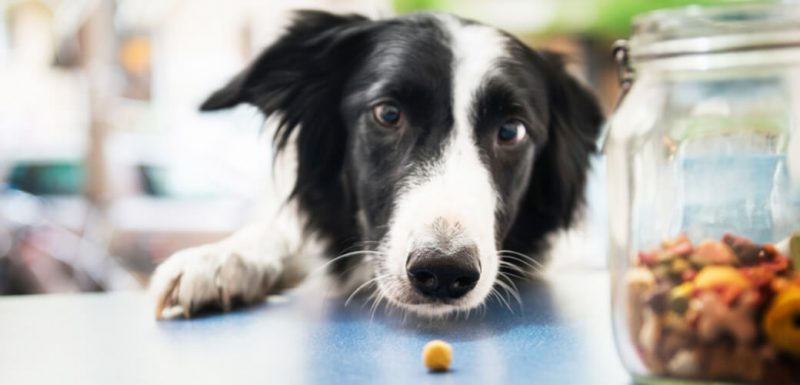 Köpeklerde beslenmede dikkat edilmesi gerekenler ve çok daha fazlası Loyal Friend'de.