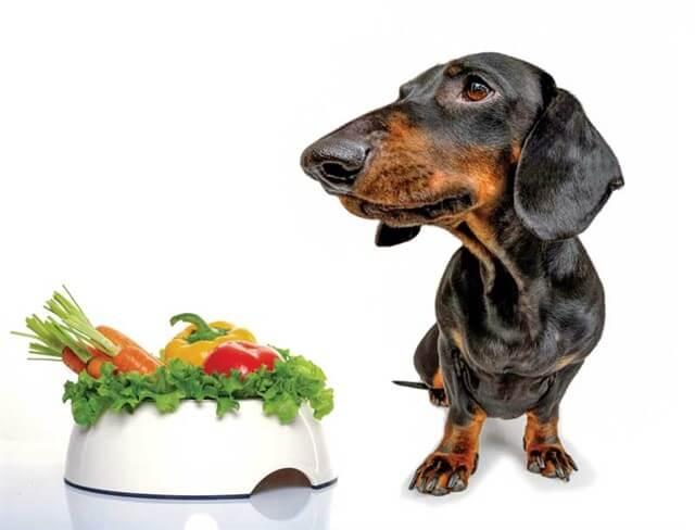 Köpeklerin enerji gereksinimleri birçok farklı faktöre bağlı olarak değişkenlik gösterir.