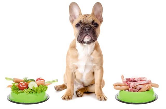 Köpeğimizin mensup olduğu ırk, enerji gereksinimi ve beslenme süreci üzerinde doğrudan etki sahibidir.