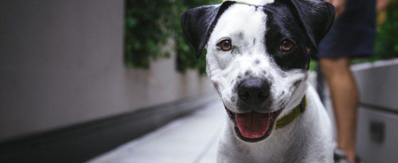 Yavru köpeklerde tuvalet eğitimi oldukça hassas bir konu olup uzman desteği gerektirir.