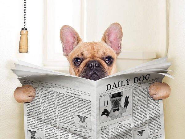 Köpeğin neden dışkı yiyor ? sorusunun yanıtı ve çok daha fazlası Loyal Friend'de.
