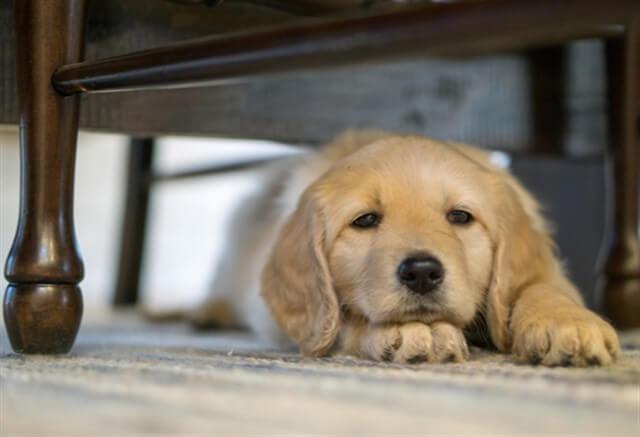 Köpekler kusma sonrasında sakinliğe ve güvende hissetmeye ihtiyaç duyarlar.