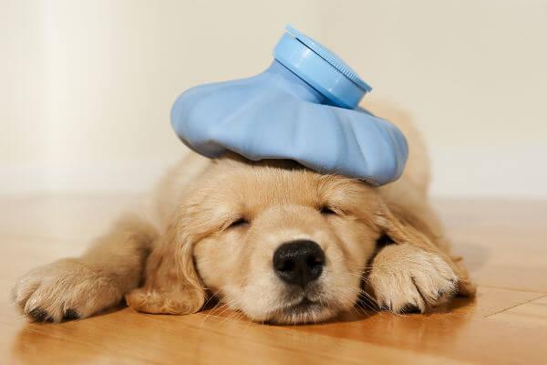Köpek dostlarımızın tüyleri onları soğuktan tam anlamıyla korumaz.