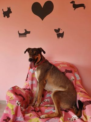 Zeynep Gülmez de köpeğini Loyal Friend'e emanet etti !