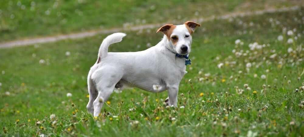 İshal köpekler, gün içerisinde birçok kez tuvalet ihtiyacı duyar.