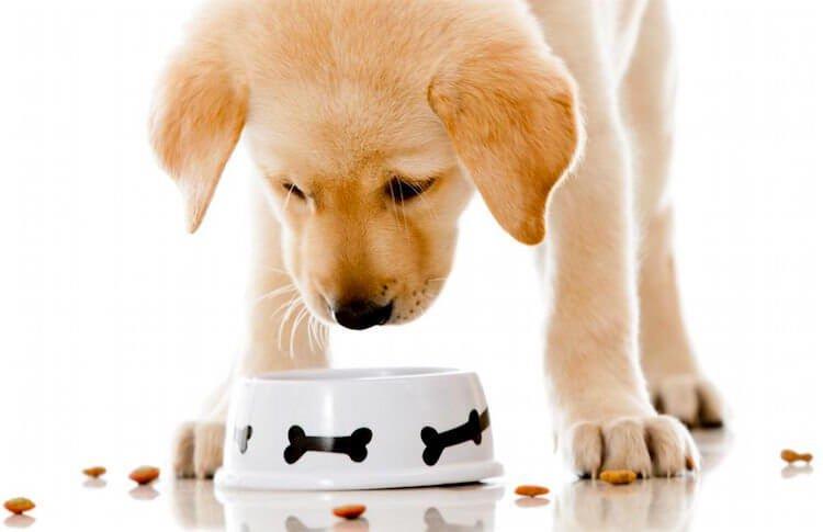 İshal olan köpeğimize özel mama hazırlamamız gerekir.