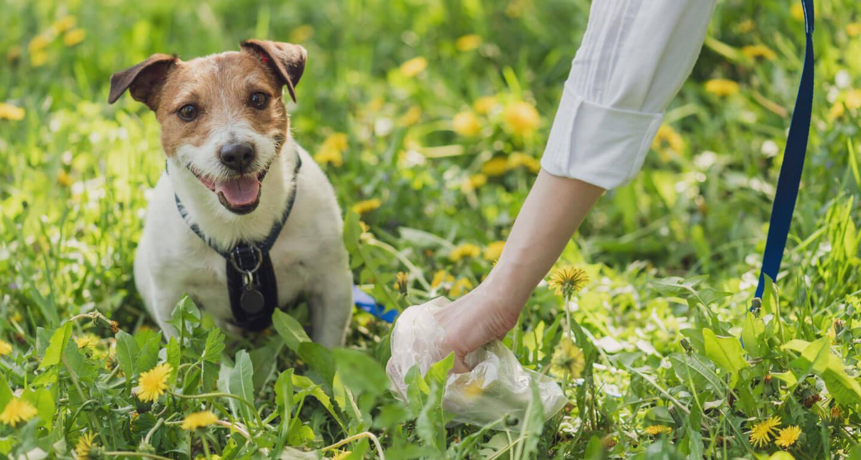 Köpeklerde ishali birkaç basit önlemle tedavi etmek mümkündür.