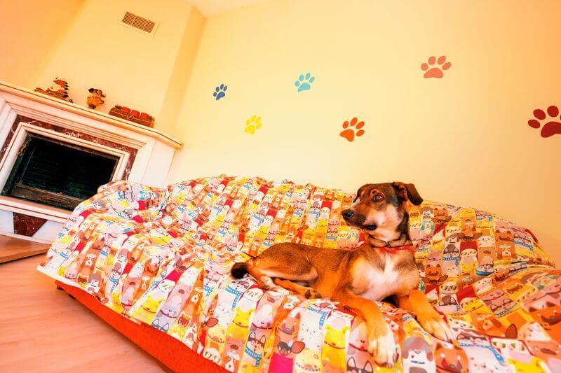 Loyal Friend'de profesyone, hijyenik ve güvenilir köpek oteli hizmeti.