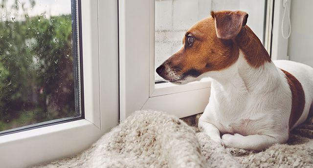 Yetişkin köpeklerin 4 saat, yavru köpeklerin 2 saat yalnız bırakılması önerilir.